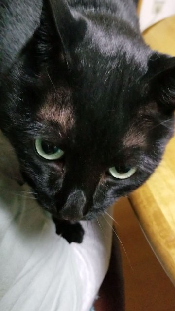 f:id:black-giant-kitty:20180619080624j:image