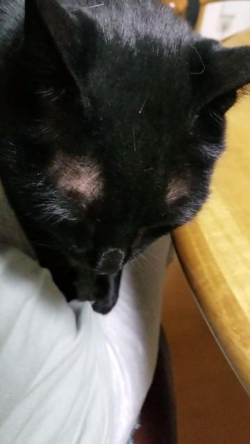 f:id:black-giant-kitty:20180619080715j:image