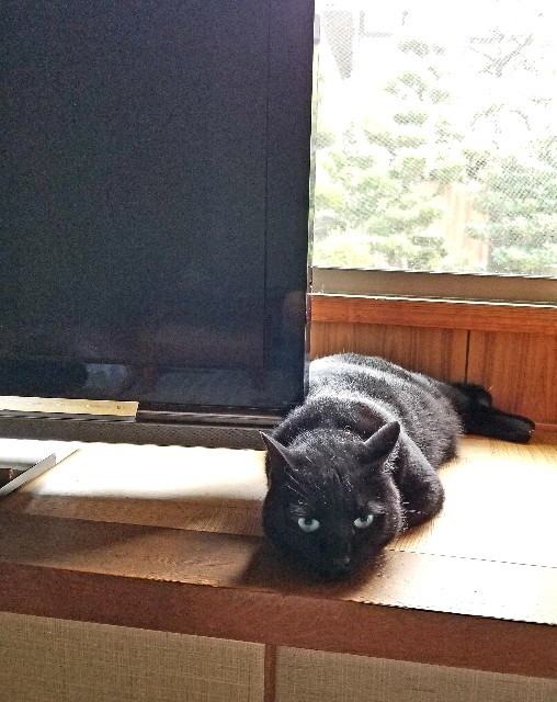f:id:black-giant-kitty:20180721063529j:image