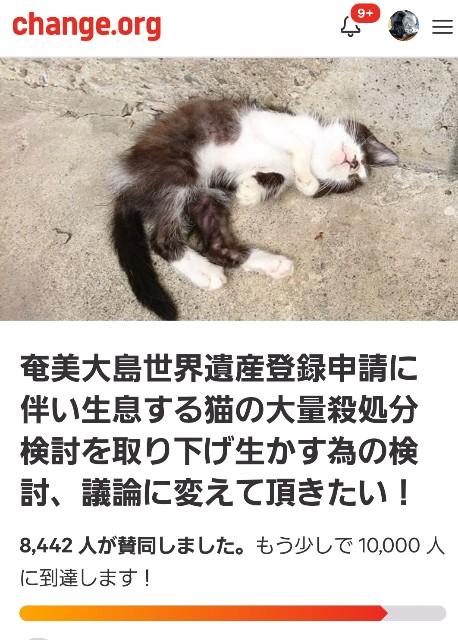 f:id:black-giant-kitty:20180721125357j:image
