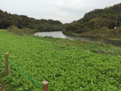 千葉県八千代市花島公園近くの検見川