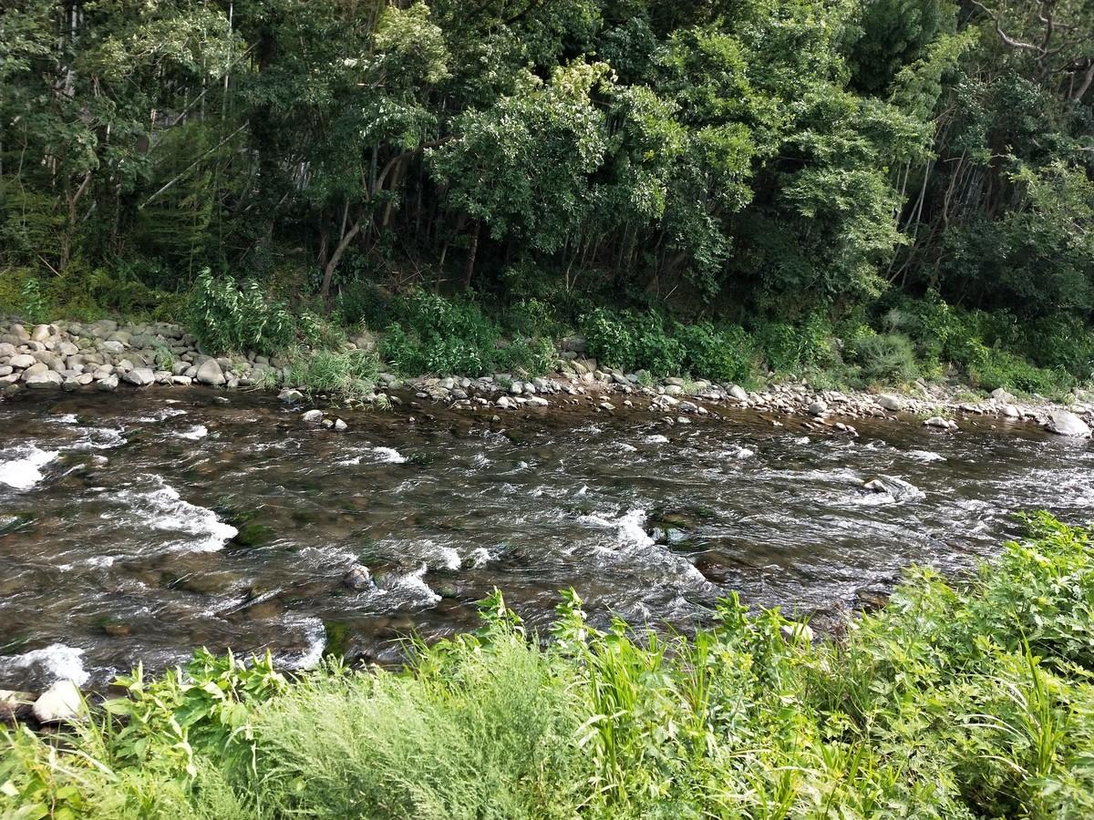 川が流れてるだけでいい、せせらぎ大好き人間