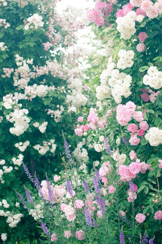 f:id:blissfulness:20150301202712j:plain