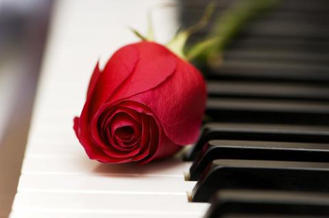 Piano_rose