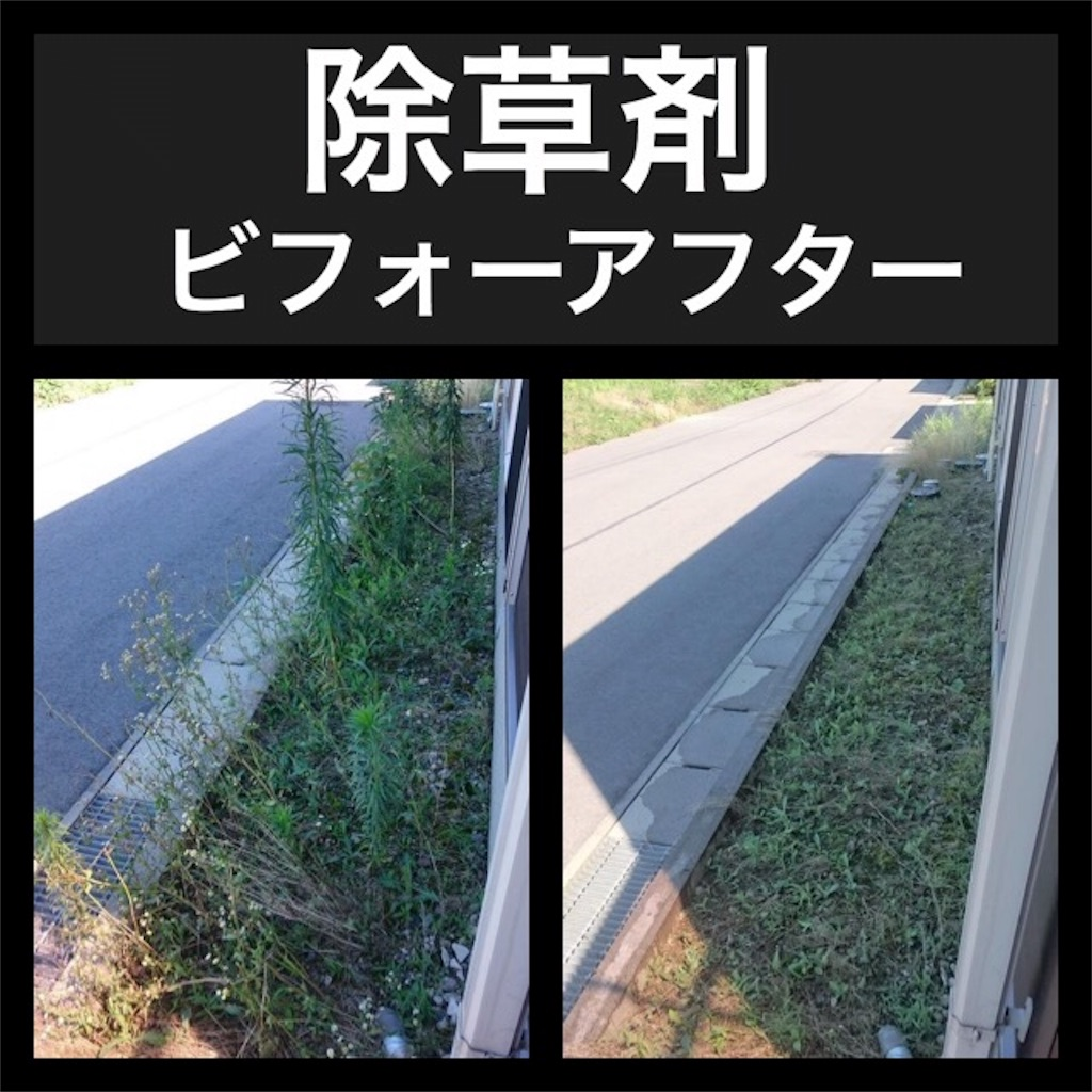 f:id:blog-japan:20161018184720j:image