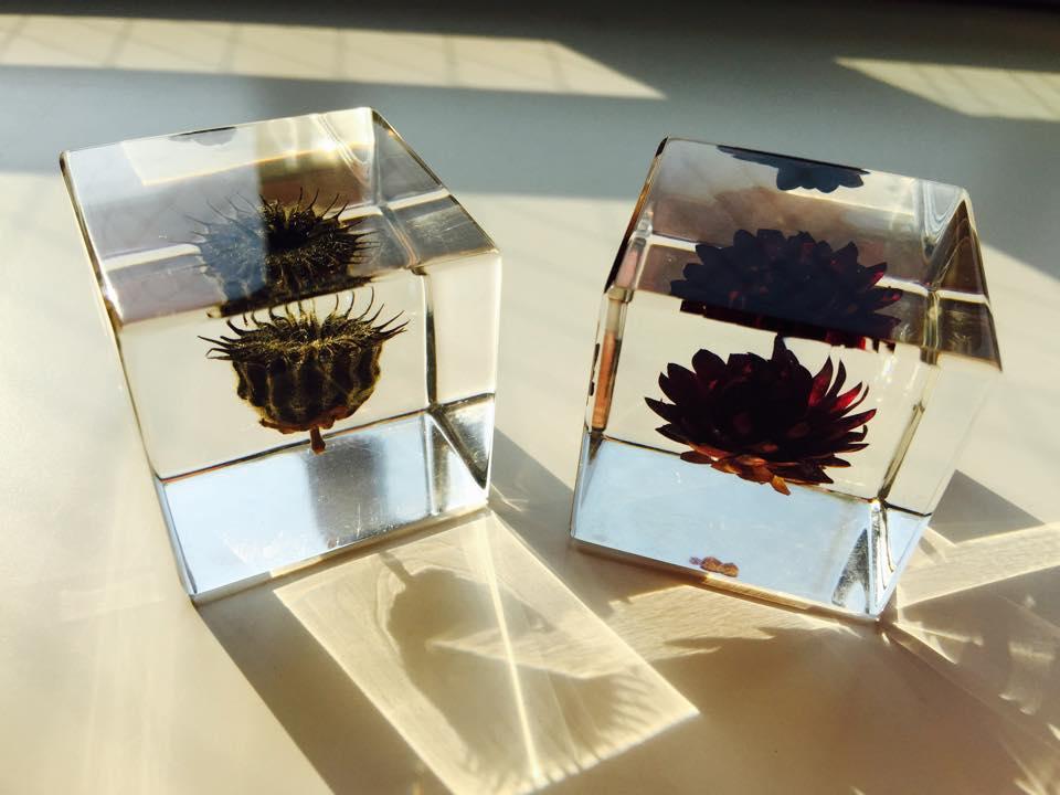 アクリルキューブに閉じ込められた2つの植物