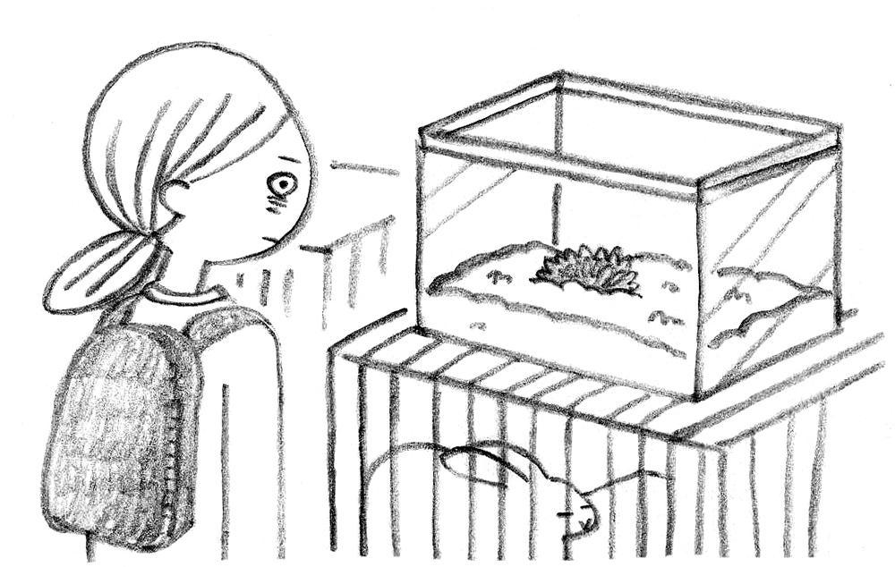 ハリネズミをお迎えする「ハリ活」