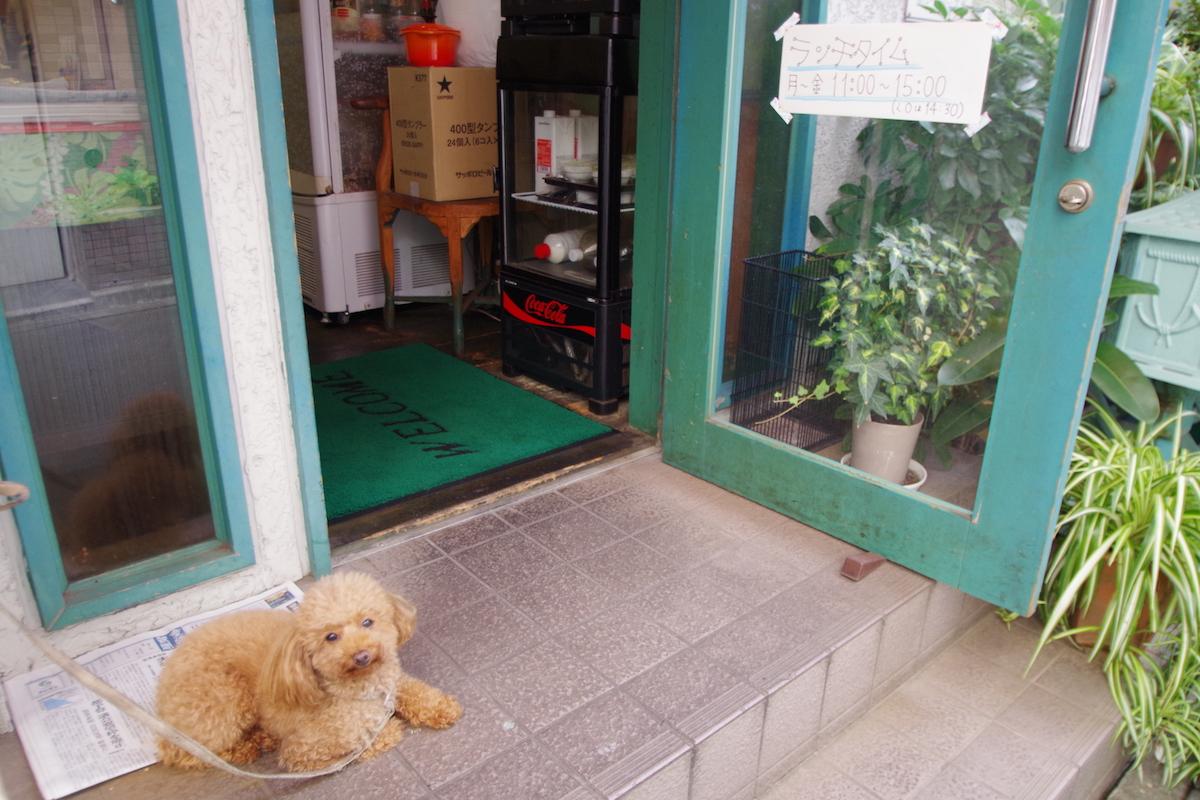 カレー屋の犬