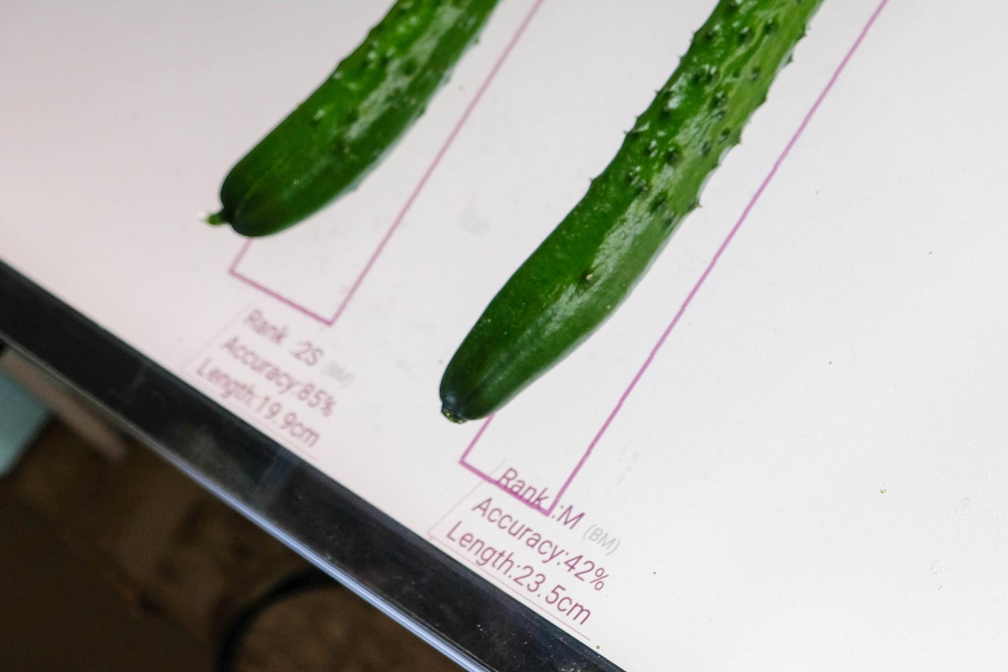 テーブルにきゅうりを置くと、2~3秒でその下に等級が表示される。複数のきゅうりを同時に判別できる