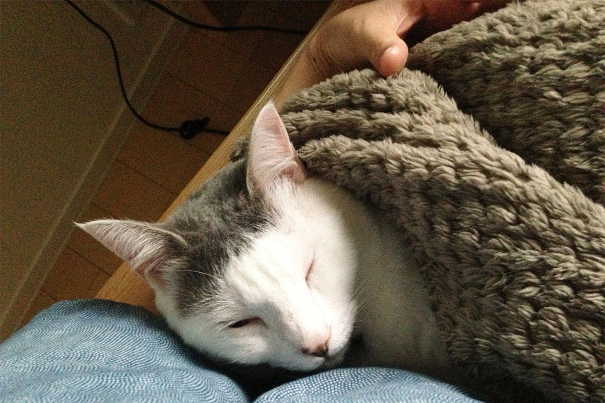 ゆるりまいの猫くるりと無印良品の鹿の子毛布