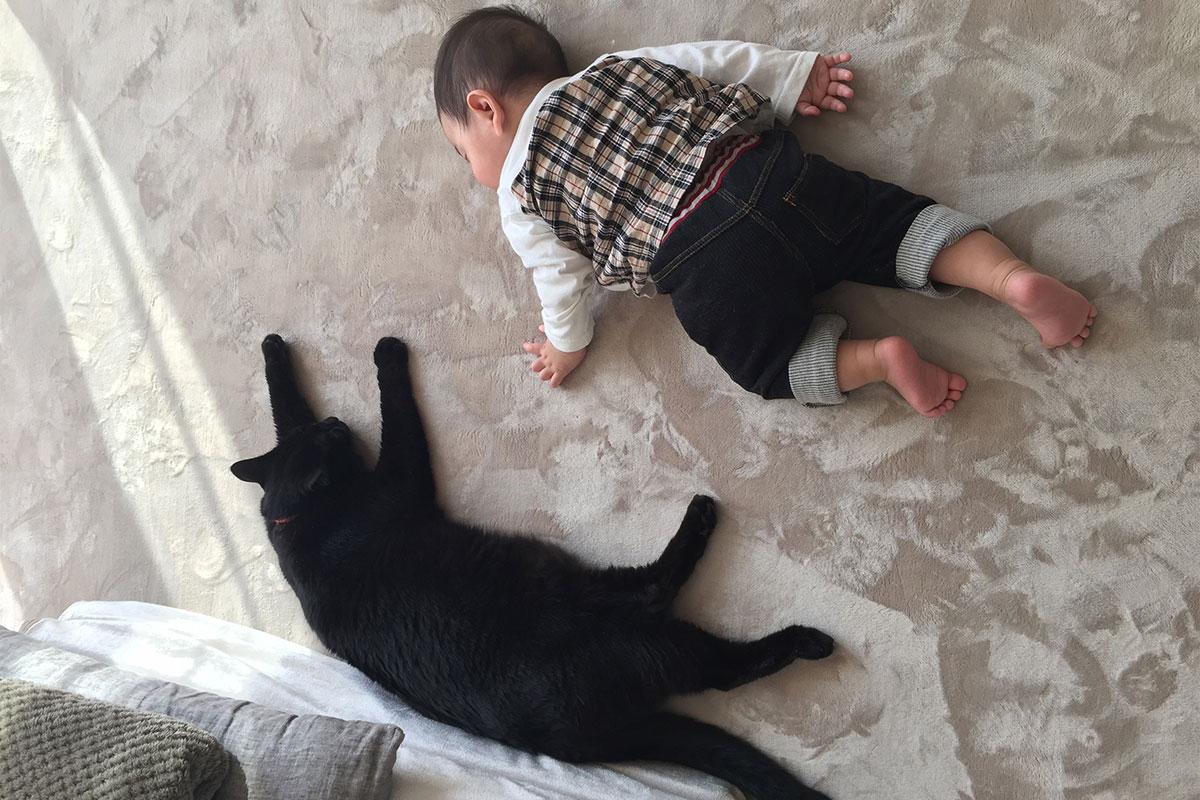 ゆるりまい 愛猫ぽっけ