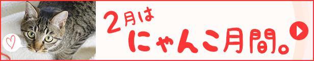 【楽天市場】2月はにゃんこ月間。