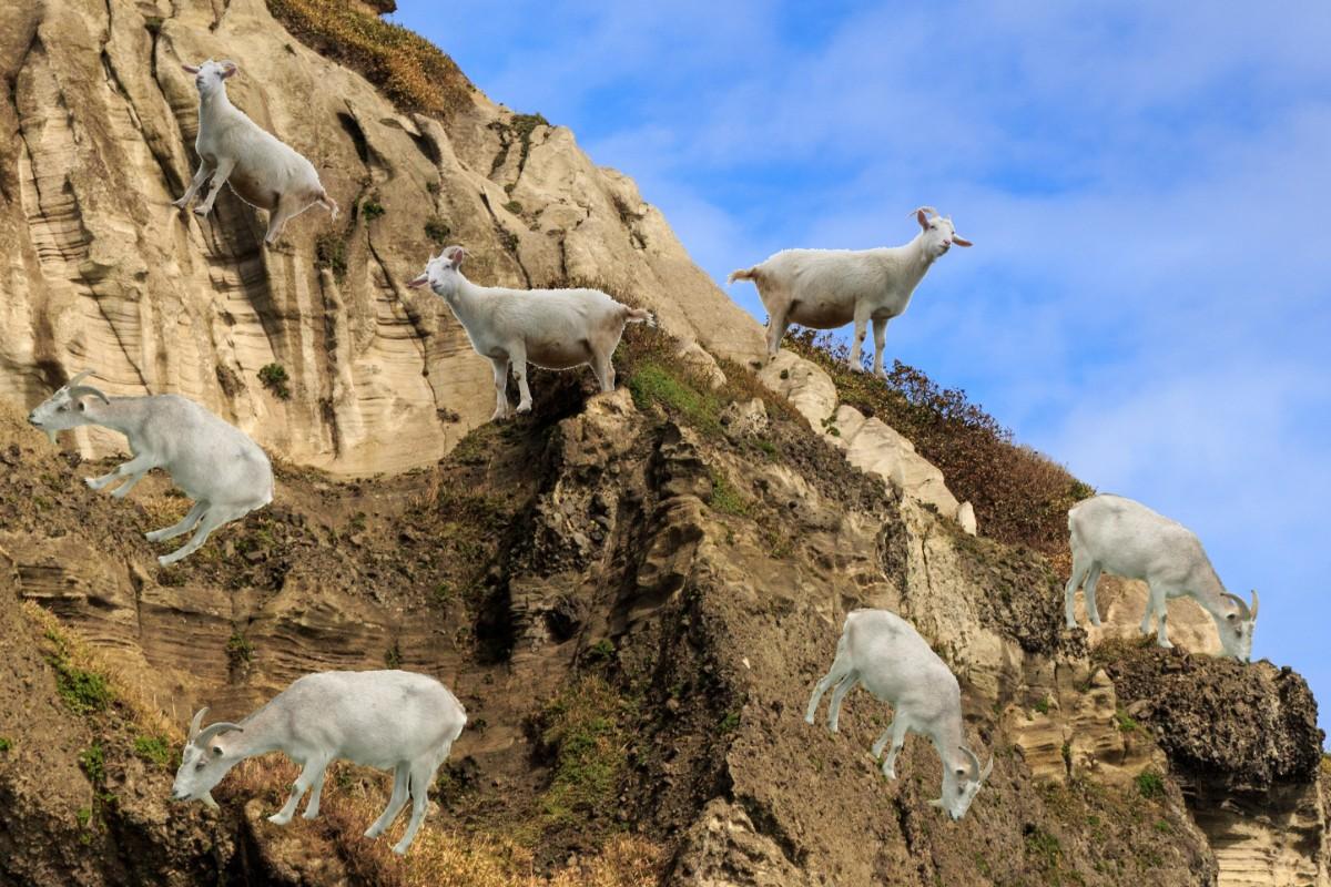 ヤギが崖に吸い付くイメージ