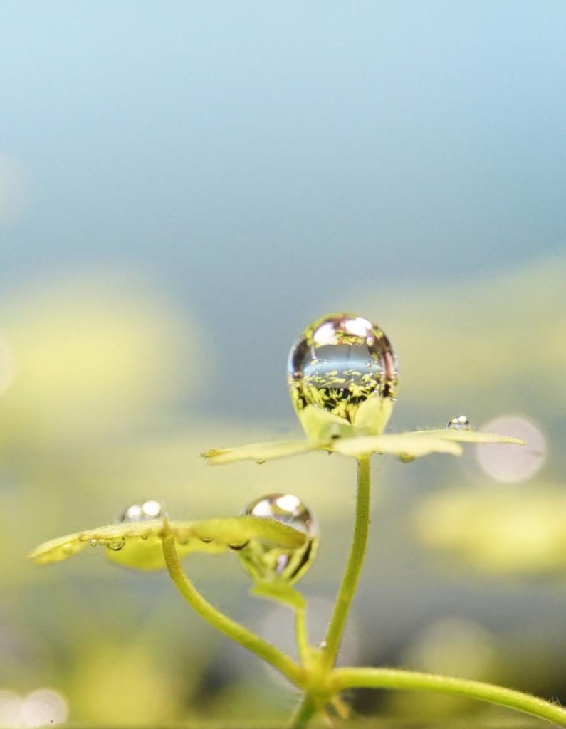 水草の光合成から作られる気泡