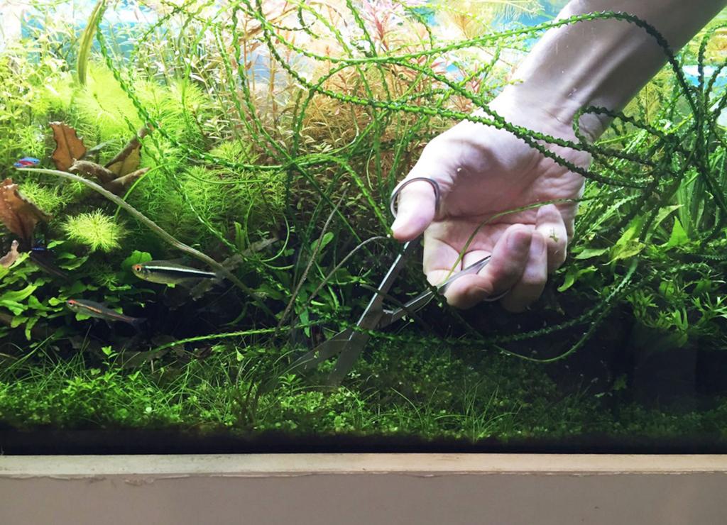 水草専用ピンセットとハサミ