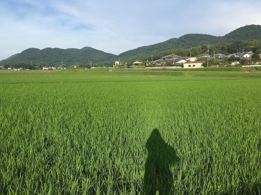 地元の岡山県の風景