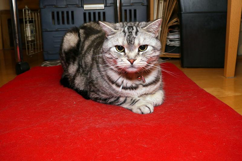 拙宅の猫ホットカーペット環境。