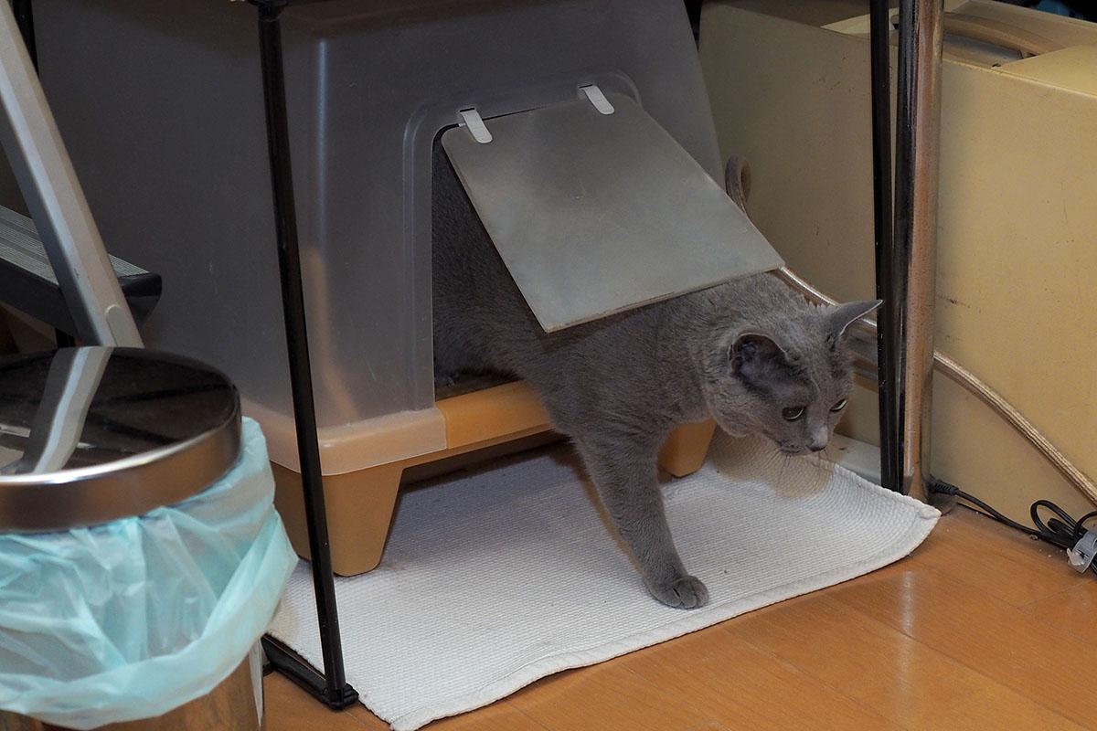 拙宅猫がトイレを済ませました。すぐに排泄物処理しますよ!