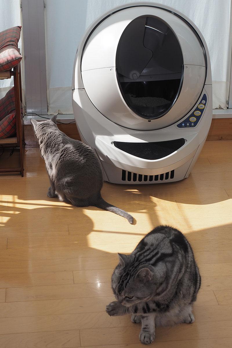 サイズは高さ74cm×幅62cm×奥行き68cm。猫トイレとしてはけっこう大きめ。