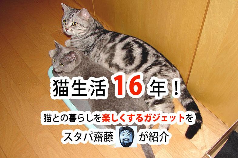 スタパ齋藤さん宅の猫、ロシアンブルーの「うか」様とスコティッシュ・フォールドの「とろ」様