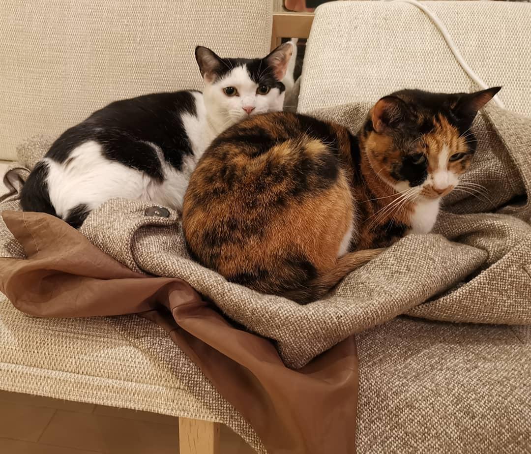 飼い猫たち