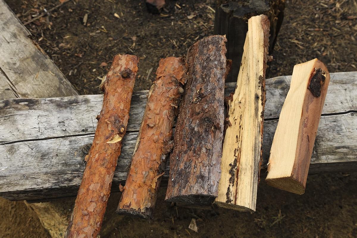 焚き火の薪は、大きく針葉樹と広葉樹の2種類