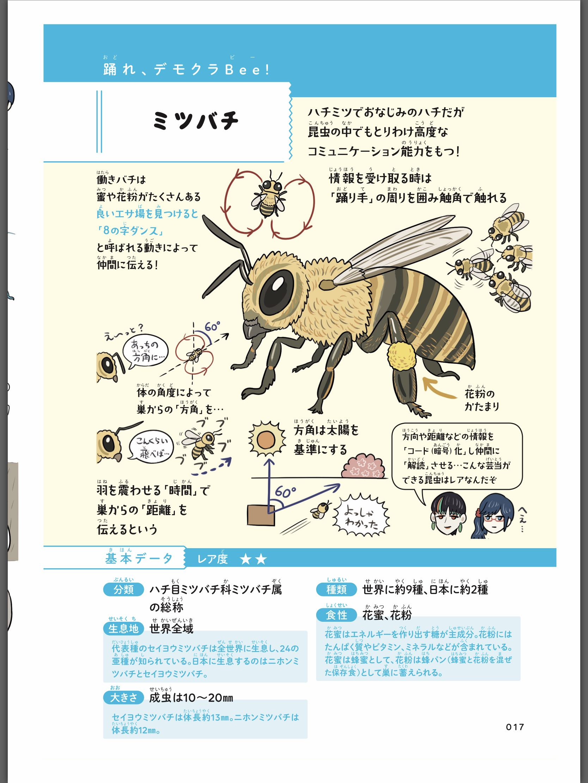 ミツバチ図解