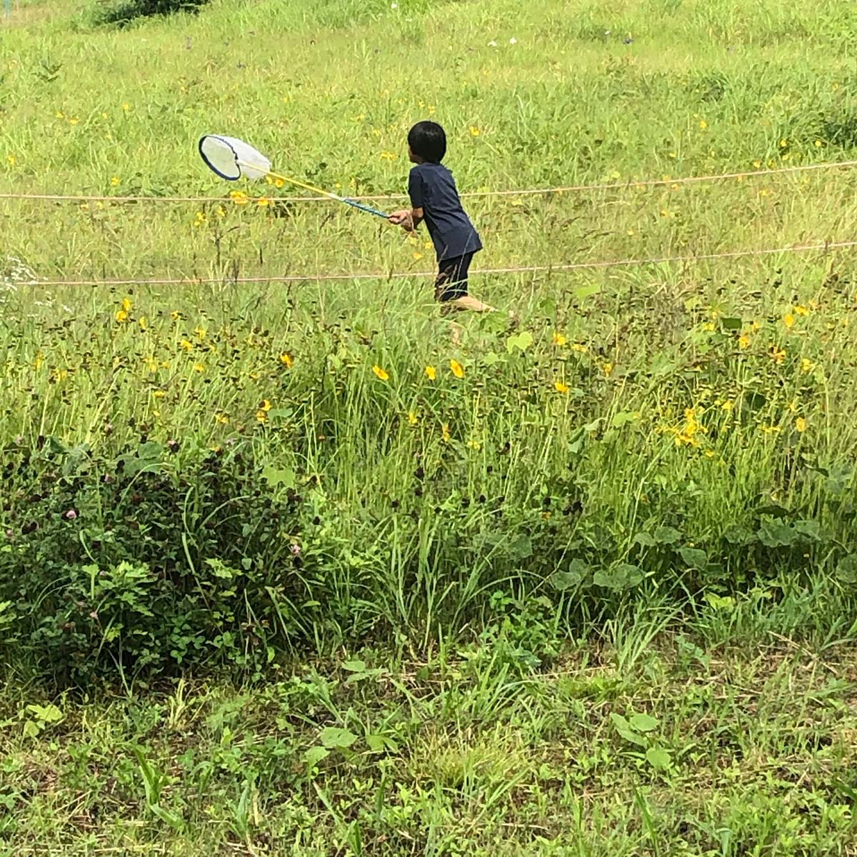 虫取りをする子供の写真