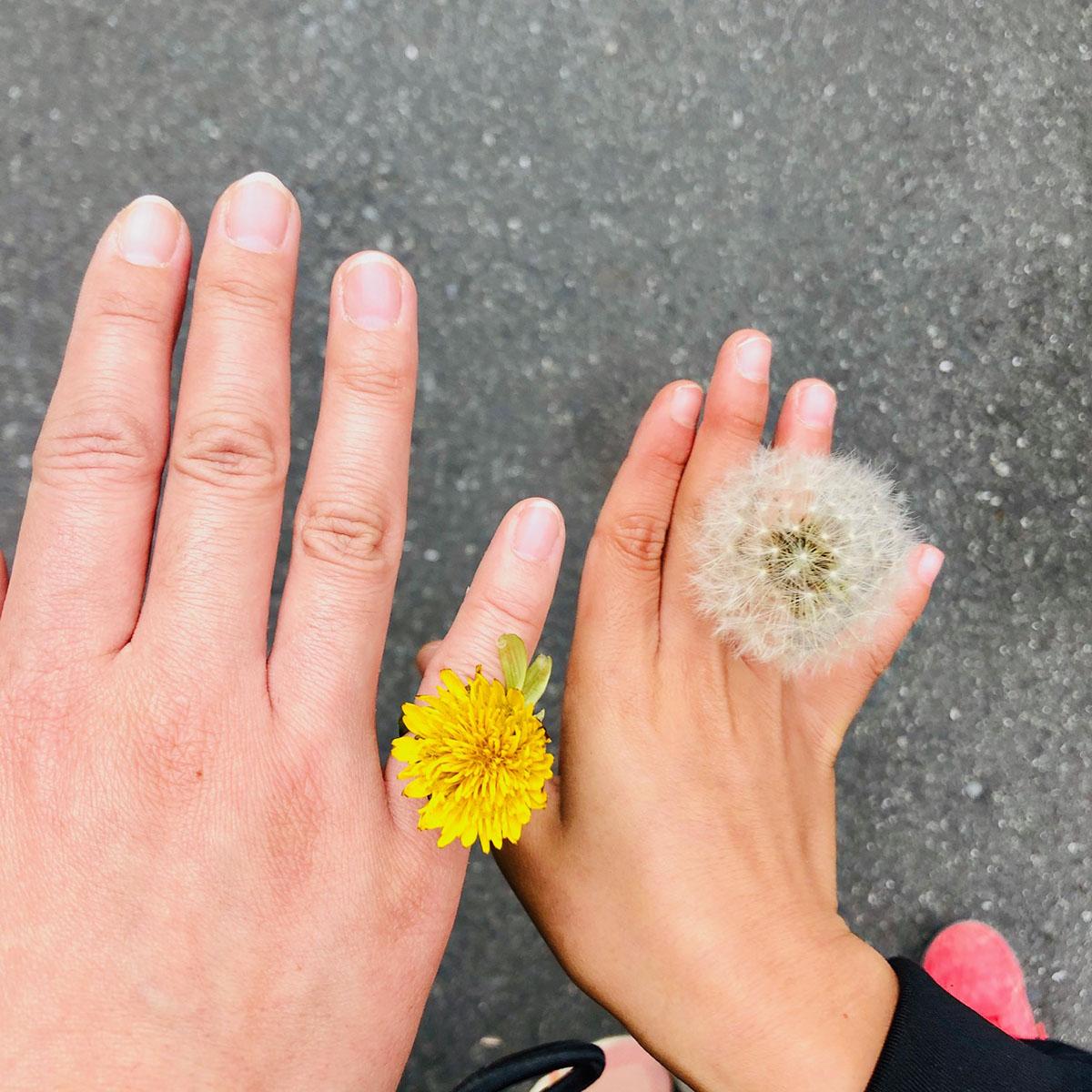 親子の手とたんぽぽの写真