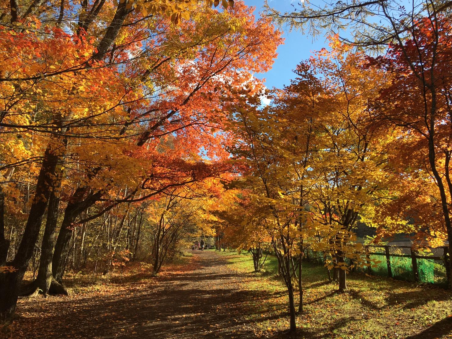 秋のキャンプ場