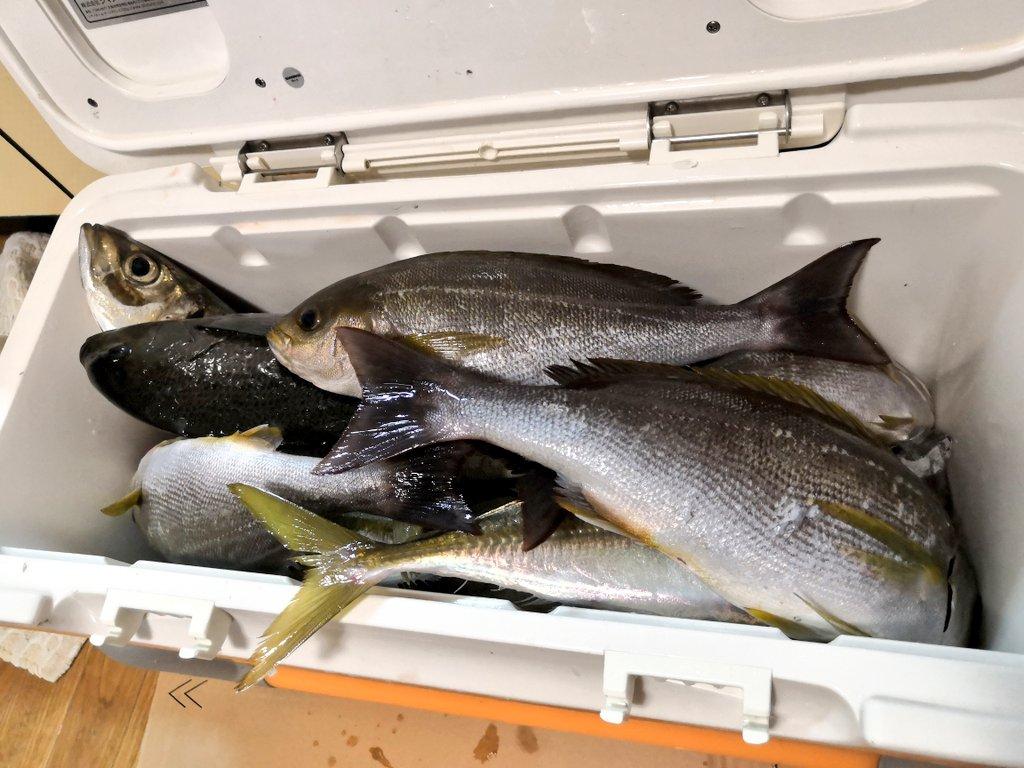 伊東沖で釣ったイサキ