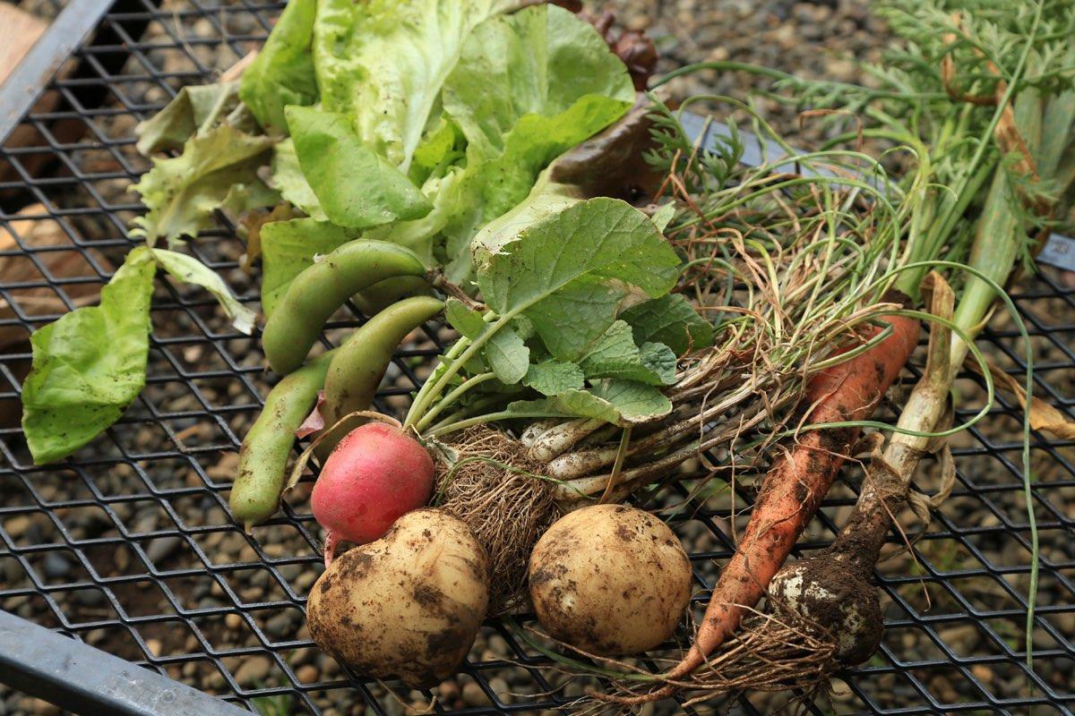 有野実苑オートキャンプ場では敷地内で採れた新鮮な野菜も楽しめる