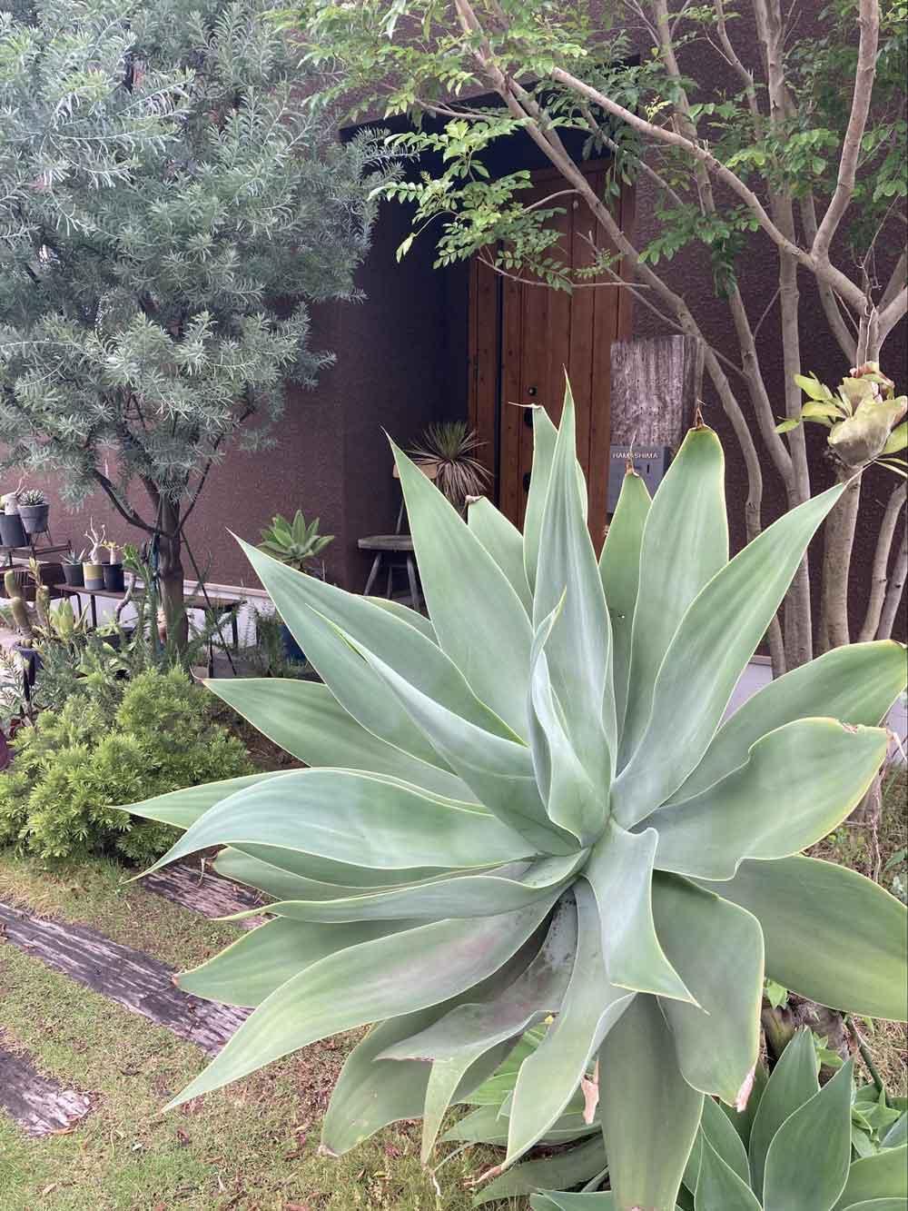「植物のある暮らし」を楽しむ家