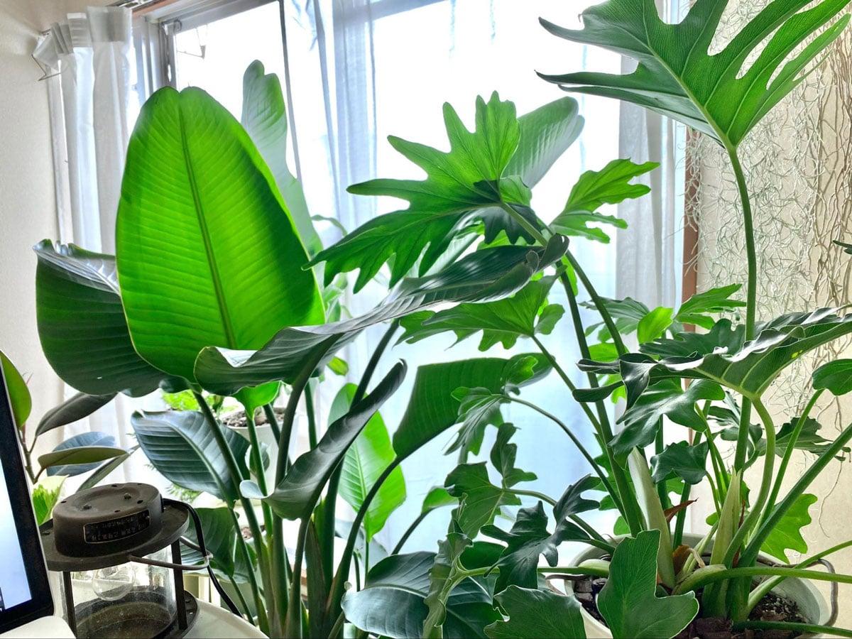 植物というペット