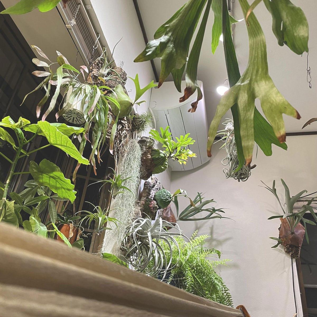 植物を吊り下げる