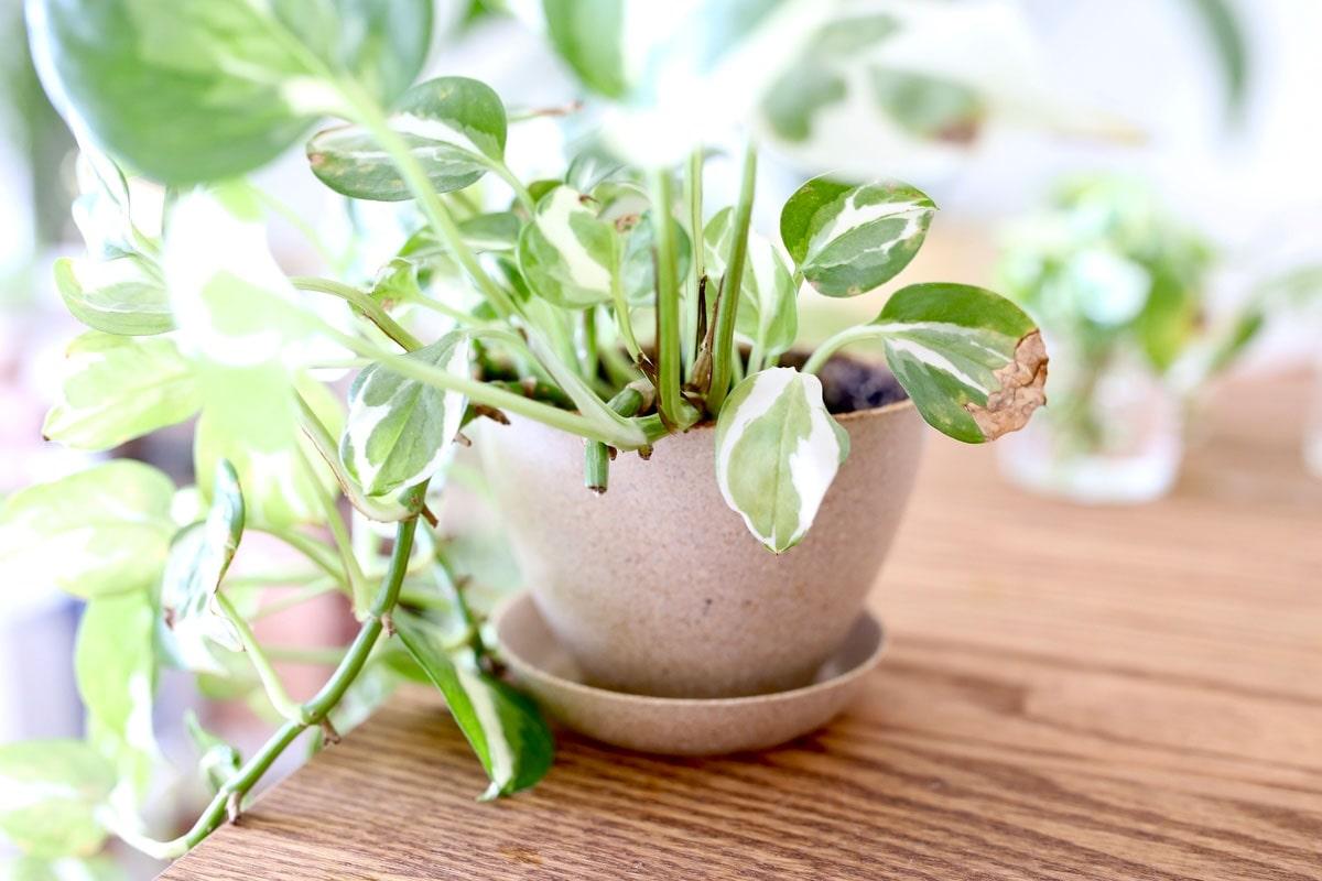 「Ecoforms」のプラスチック製植木鉢