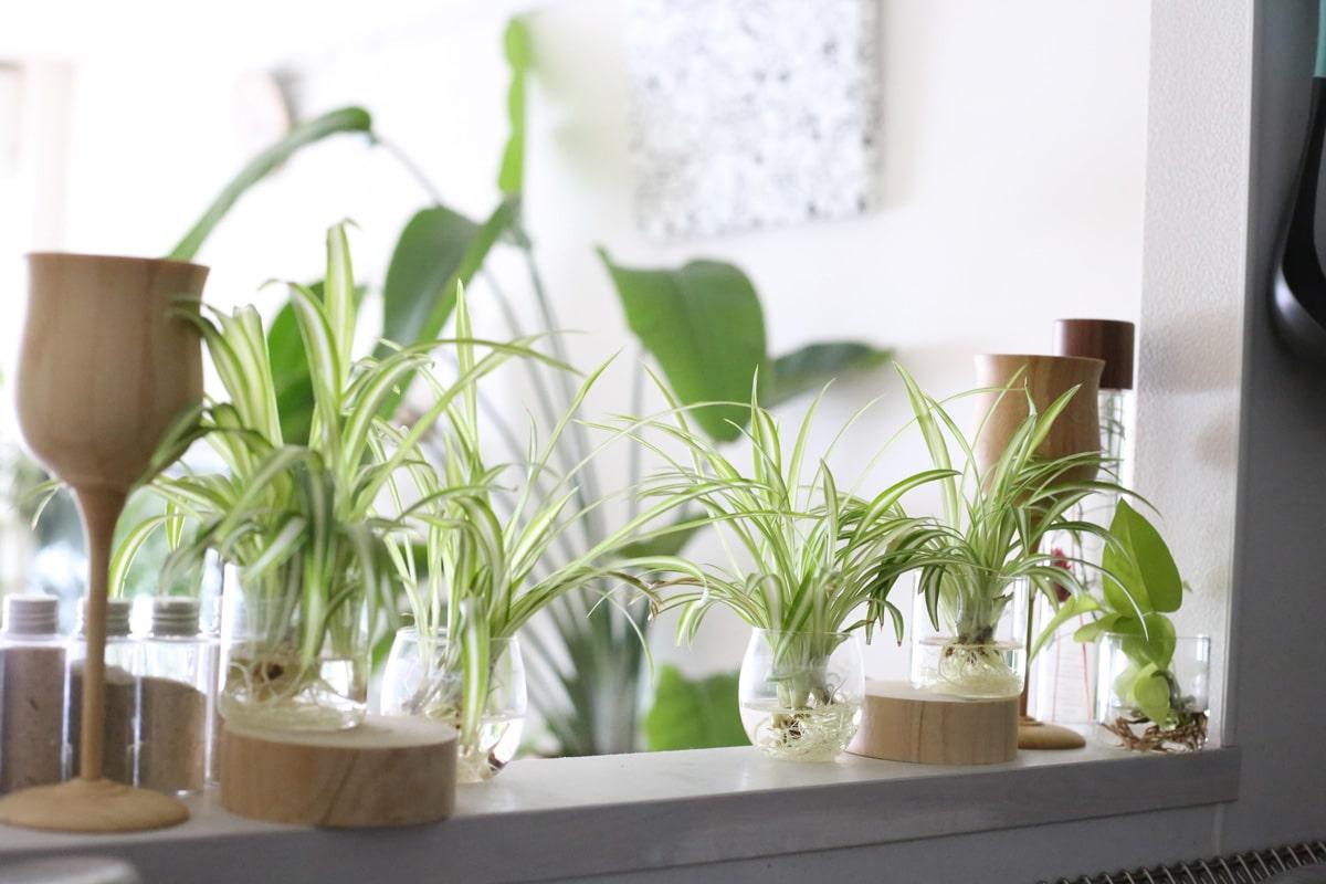 キッチンカウンターに水差し観葉植物