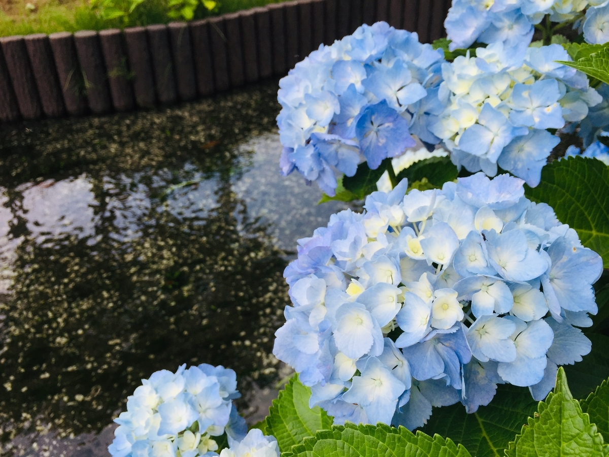 f:id:blogmotosumiyoshi:20190602162023j:plain