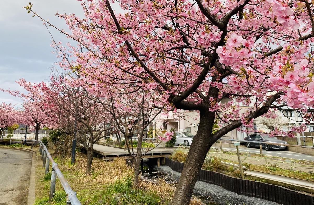 f:id:blogmotosumiyoshi:20200222165709j:plain