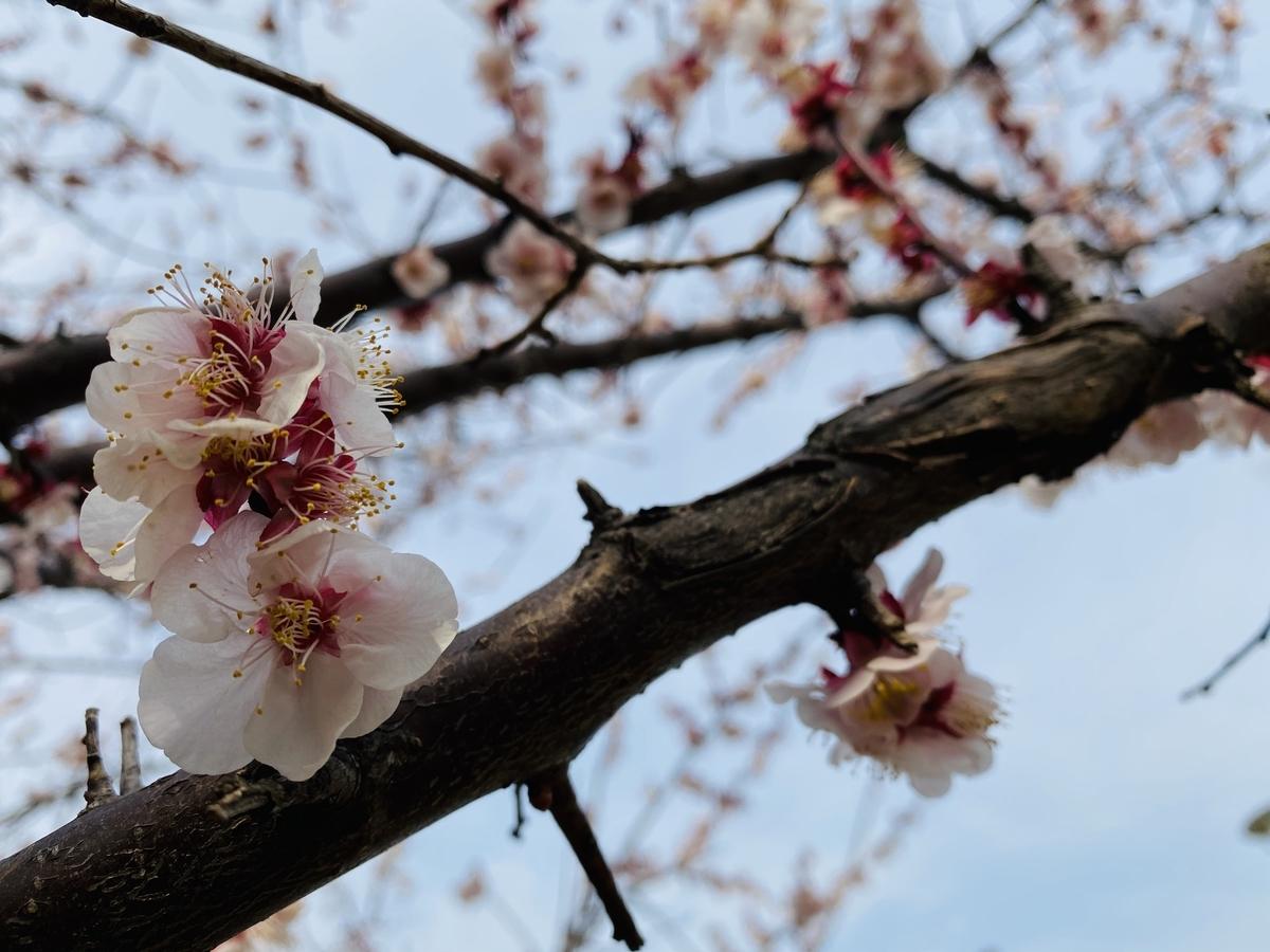 f:id:blogmotosumiyoshi:20200229143946j:plain