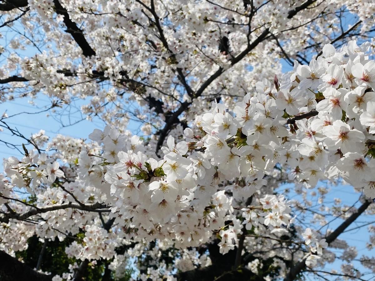 f:id:blogmotosumiyoshi:20210327222614j:plain