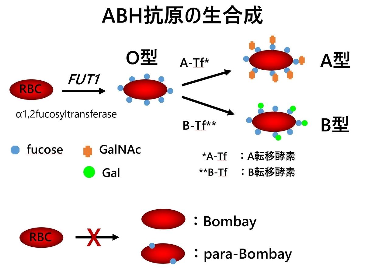 f:id:bloodgroup-tech:20200215164540j:plain