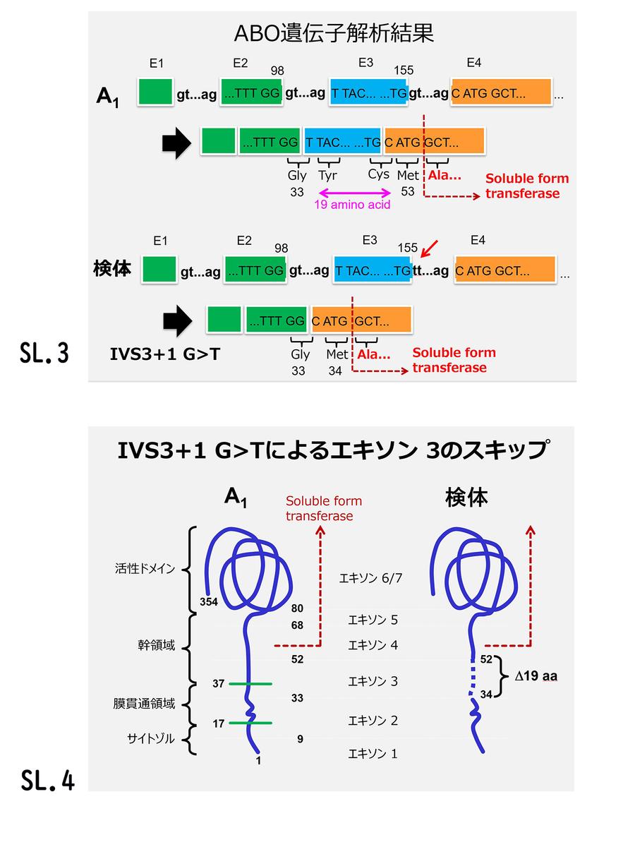 f:id:bloodgroup-tech:20200613131154j:plain