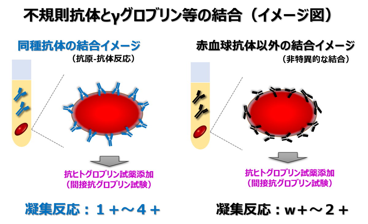 f:id:bloodgroup-tech:20210530081351p:plain