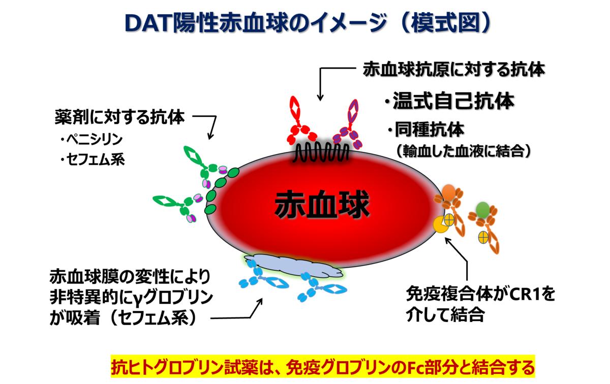 f:id:bloodgroup-tech:20210622075721p:plain