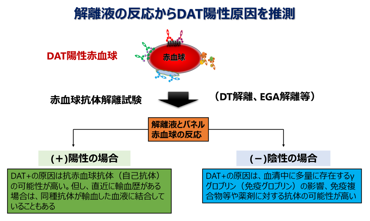 f:id:bloodgroup-tech:20210622075749p:plain