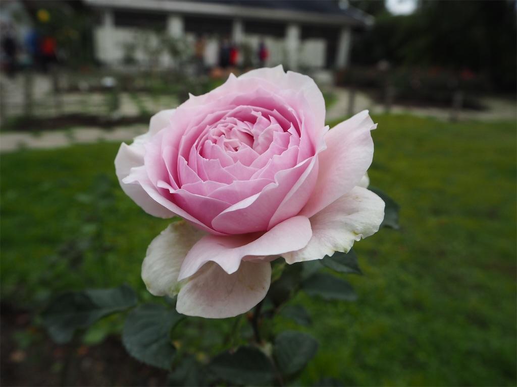 f:id:bloom025:20170417220822j:image