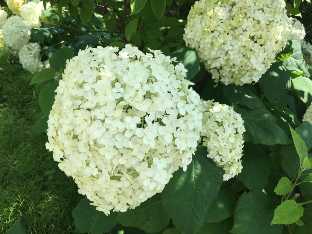 f:id:bloom1126:20161007095636j:plain