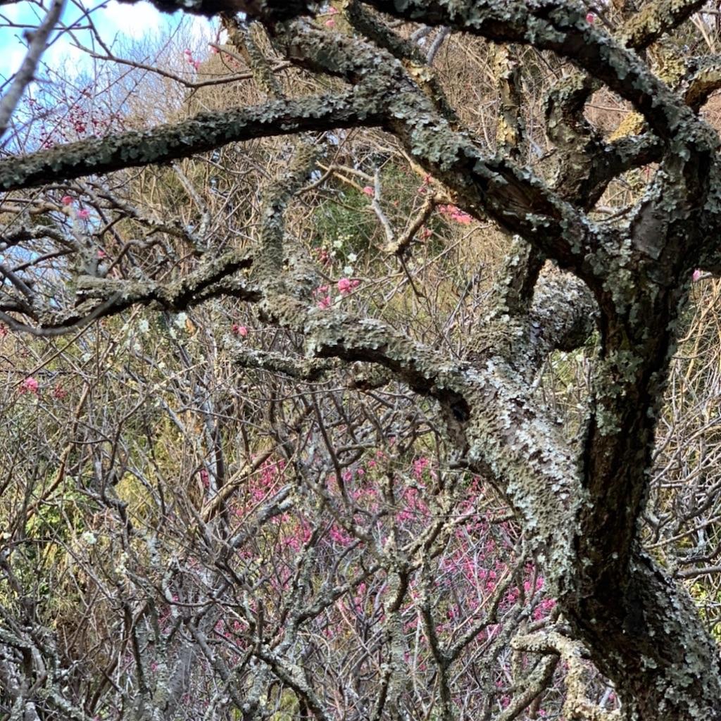 f:id:blossom-art:20200202172418j:image