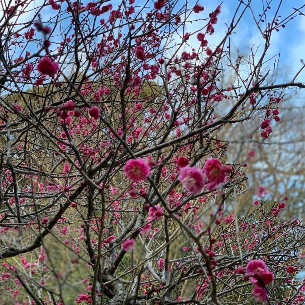 f:id:blossom-art:20200202172532j:image